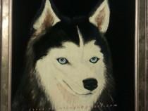 Pictura in ulei pe catifea - Husky