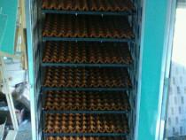 Executam Incubatoare oua automate  performante