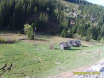 Teren la munte 6940 mp