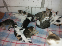 Pisicuţe pentru adopţie