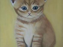 Tablou pisicuta