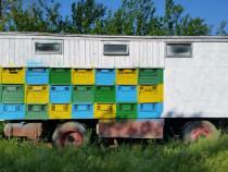 Pavilion albine cu tot cu lazi