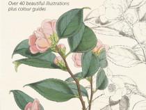 Carte de colorat de lux Kew Gardens, flori