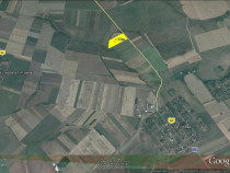 8 ha teren arabil Sagu, la soseaua Cruceni - Firiteaz