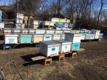 Lazi noi pentru fam albine orizontal vertical