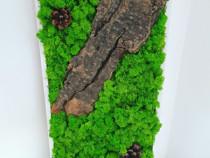Tablou licheni verde deschis 45x25