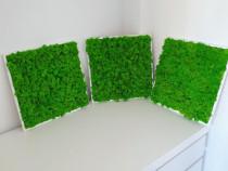 Set tablouri cu licheni verde deschis 40x40