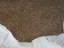 Semințe trifoi roșu