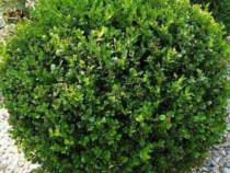 Plante ornamentale diferite specii si dimensiuni