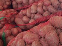Cartofi Albi Rosu Ceapa plata din arbagic romineasca