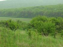 Disponibil 3.600 mp teren extravilan lângă pădure