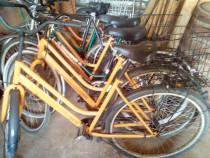 Lot 15 biciclete dama engros