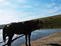 Ferma cu iazuri in Suceava