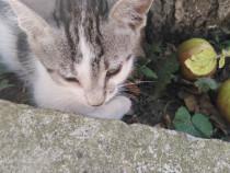 Pisicuțe 2 luni adopție