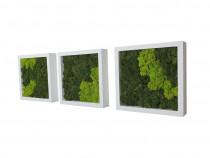 Set 3 tablouri pătrate 25 cm albe cu licheni stabilizați
