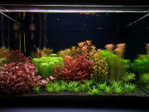 Intretinere si amenajari acvarii