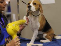 Cursuri de calificare coafor canin Buzau