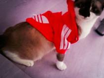 Trening geaca hoodie hanorac caine pisica Adidas