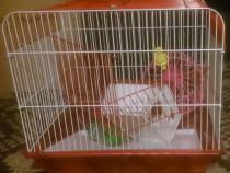 Cusca hamsteri