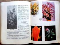 Floricultura, Mirea Preda, 1979