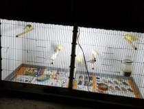 Colivii păsări de apartament