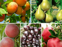 Pomi fructiferi calitatea 1!!