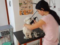 Curs Coafor Canin Bistrita