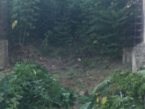 Defrișare vegetație pomi,toaletate gard viu