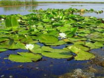 Teren Delta Dunarii pentru investitii 1500 mp