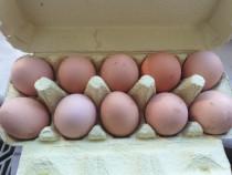 Oua de gaina crescute libere