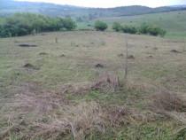 Teren arabil+livada de pruni in Posesti 4774 mp