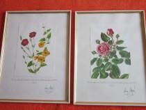 Tablou vintage,made Germany,temă botanică,anii 60,rama lemn