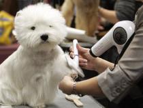 Curs acreditat cosmetica canina Piatra Neamt