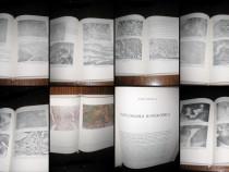 6997-I.Medicina-Munteanu-Uterul Cicatriceal dupa cezariana.