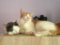 Pisicute adoptie