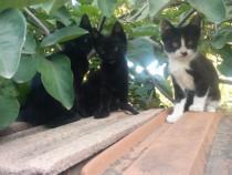 Ofer spre adoptie 2 motanei si o pisicuta