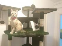 Sisal loc de joaca pentru pisici