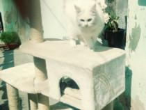 Mobilier pentru pisicute