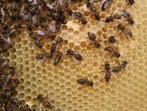 Roiuri albine! lichidare stoc!