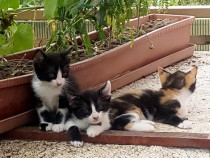 Donez 3 pisicite jucause