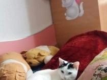 Adopție Pisicuță
