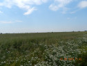 Teren Extravilan arabil Slatina 2 ha