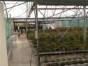 Sera de flori cu sistem hidroponic 2140 mp