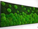 Tablou muschi de padure, naturali stabilizati Jolie Arts