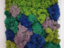 Tablou licheni naturali 'Feerie' 25 x 25 cm