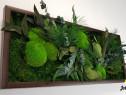 Model Green Day, tablou licheni, Jolie Arts