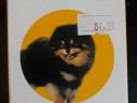 Antiparazitare interne / externe caini si pisici
