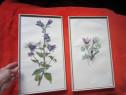 Tablou vintage,temă botanică,anii '50,rama lemn,made Germany