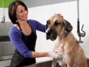 Cursuri de Cosmetica Canina in Iasi