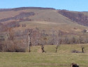 Pasune/faneata si arabil de deal/munte,intre 500 si 4000 ha
